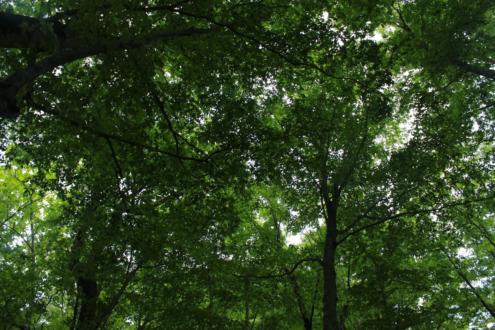 いい ね の 森 イーノの森Dog Garden トップページ
