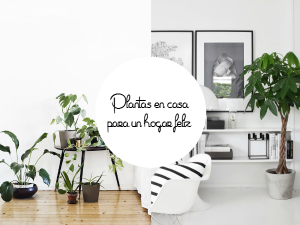Las 5 mejores ideas para tener plantas en casa decorar for Mejores blogs decoracion