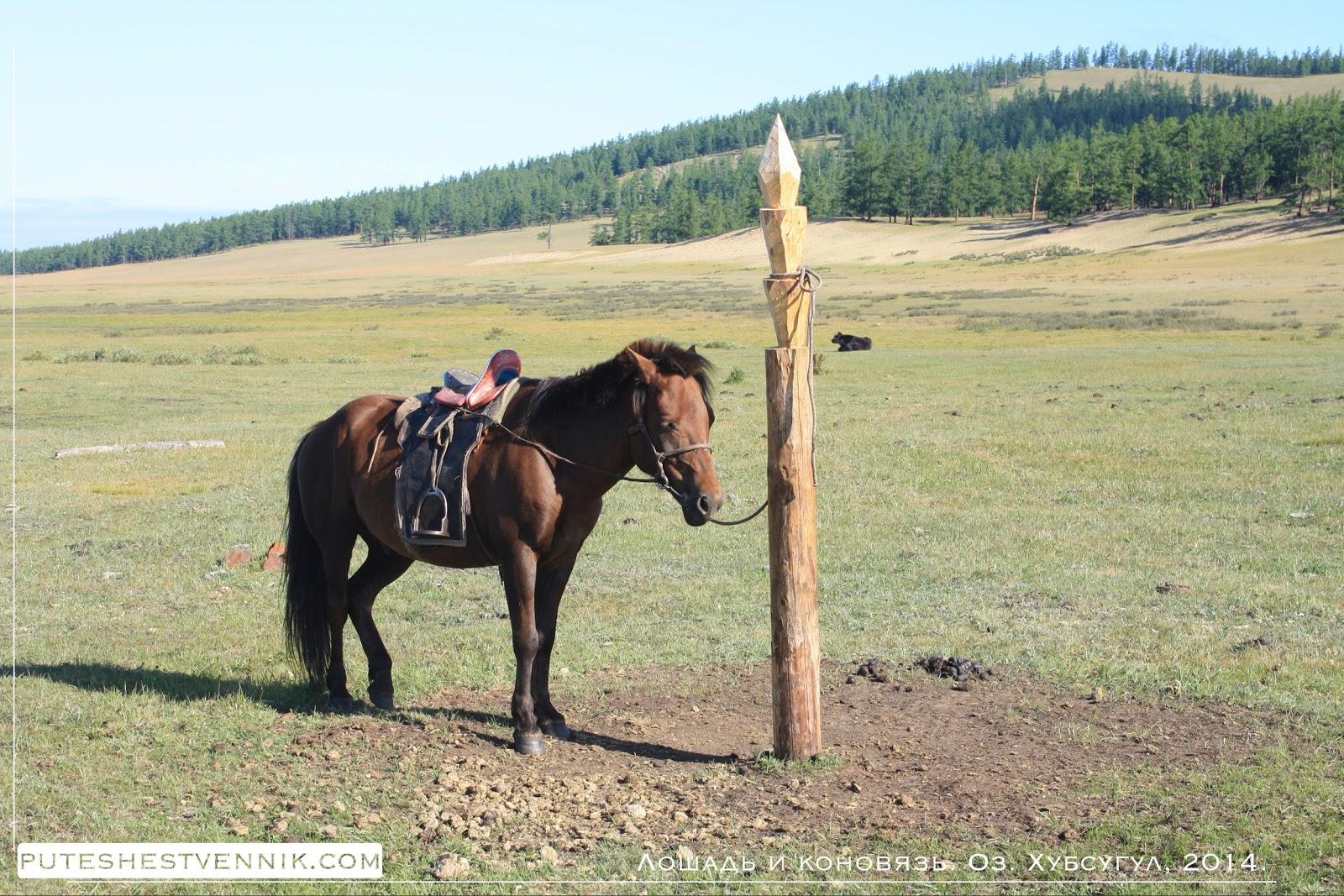 Лошадь и коновязь на озере Хубсугул