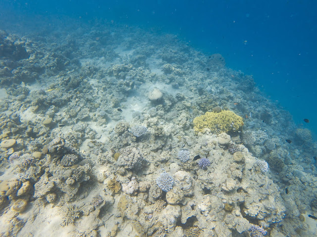 Corales de camino al Cedar Pride, Aqaba, mar Rojo, Jordania