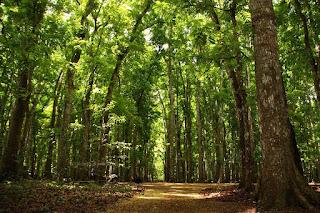 Hutan Alas Purwo