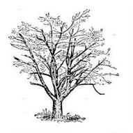 Contoh Soal Psikotes Menggambar Pohon