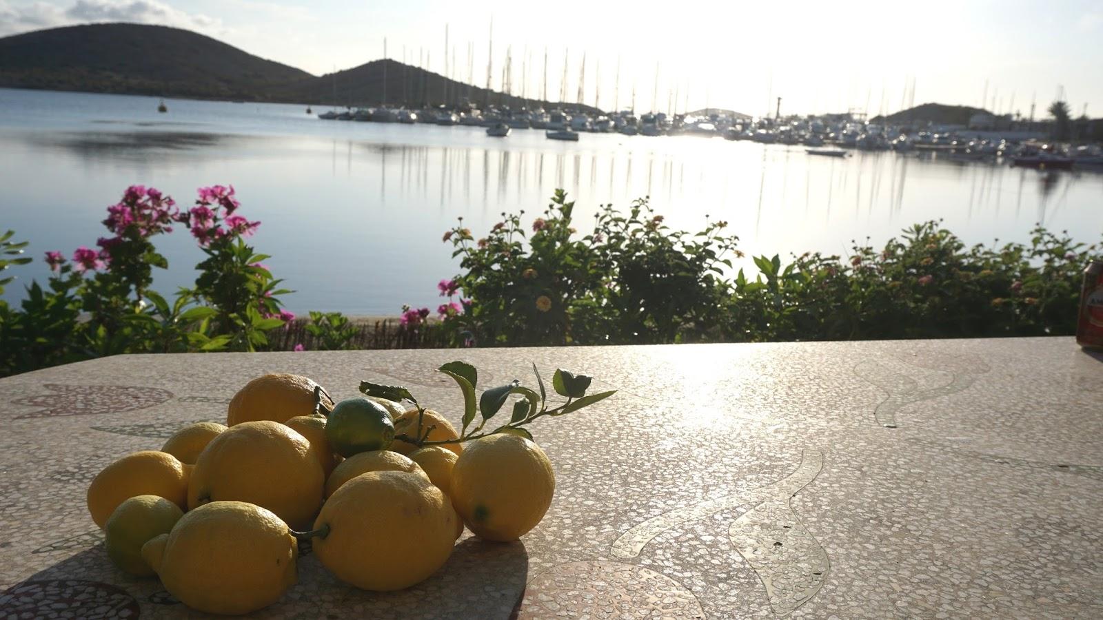 cytrynowy gaj Hiszpania, hiszpańskie cytryny, hiszpańskie owoce