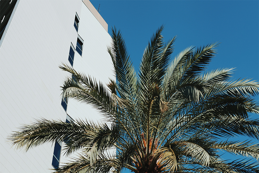 Palm tree next to Hilton hotel Barcelona