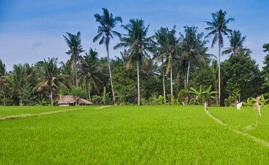 Kerobokan Bali