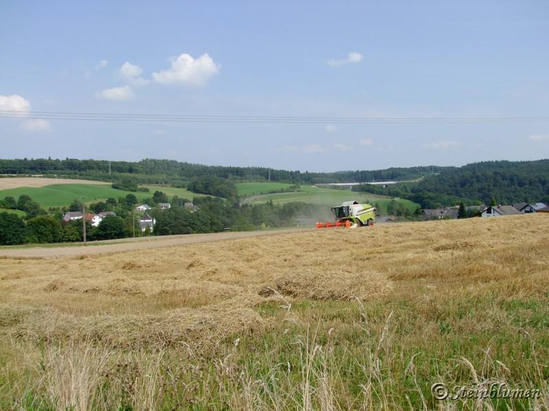 Getreidefeld mit Mähdrescher