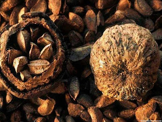 Brazil nut fruit images wallpaper