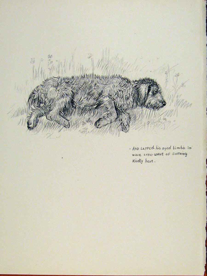 Sleeping Dog Sketch - Old Fine Art Print. KF Barker 1938. Notes from the Pack. A dog blog.