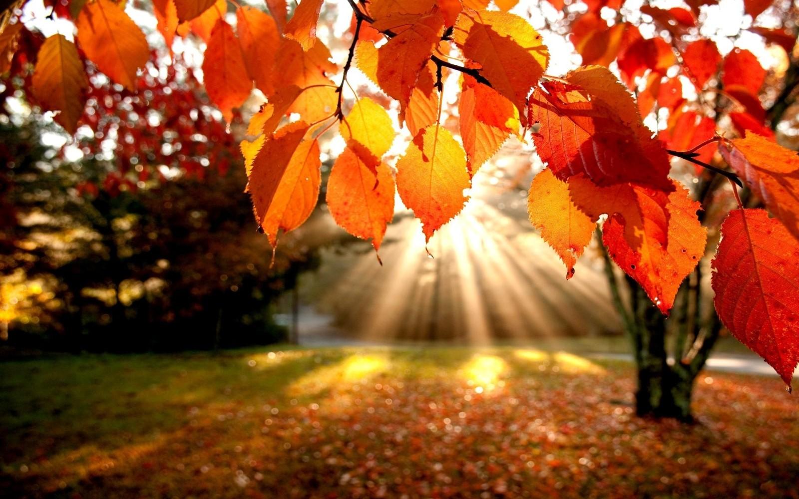 foto de Fond d'écran automne hd gratuit - Fond d'écran hd