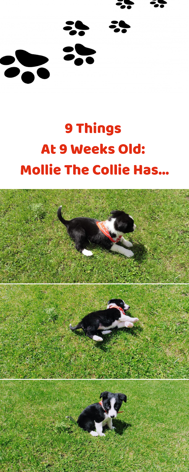 9 Things At 9 Weeks Old: Mollie The Collie Has