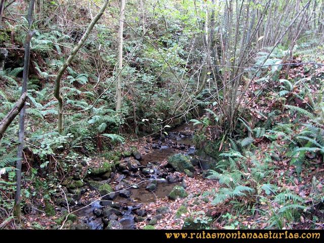 Ruta al San Justo o Cogollu: Arroyo entre la vegetación