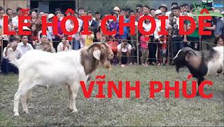 Lễ hội Chọi Dê tỉnh Vĩnh Phúc