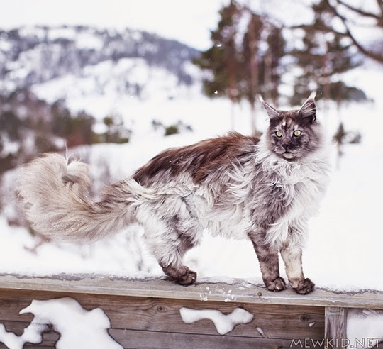 cat against snowy background