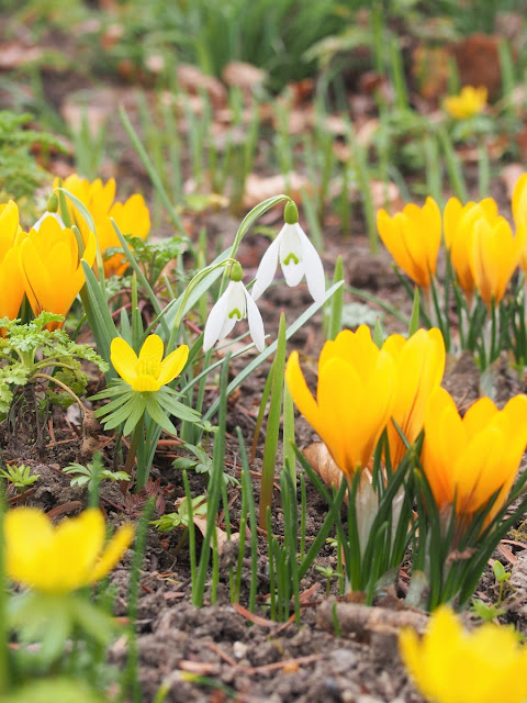 snezienky botanicka zahrada masarykovy univerzity brno