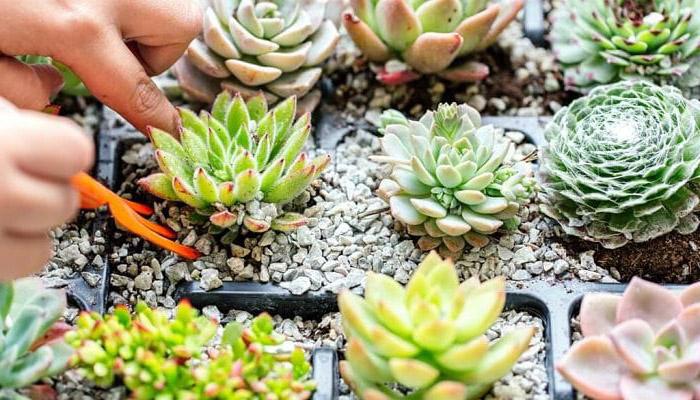 Plantas a la sombra