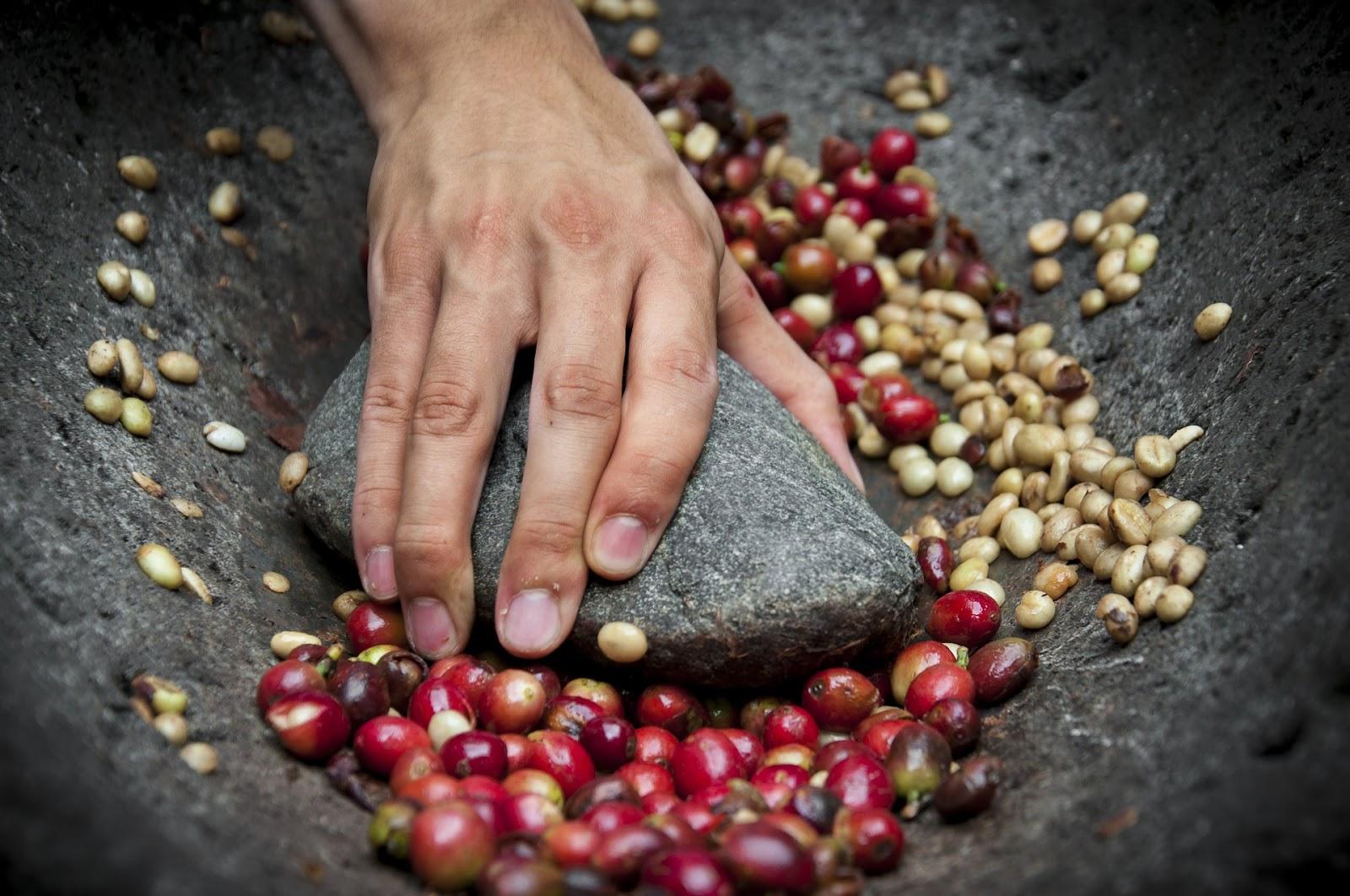 583a7c209 ... kávy existuje viacero názorov a určujúcich kritérií. Viem, čo mi chutí,  ale v dnešnej dobe taktiež očakávam tú najkvalitnejšiu kávu, najlepšie bio,  ...