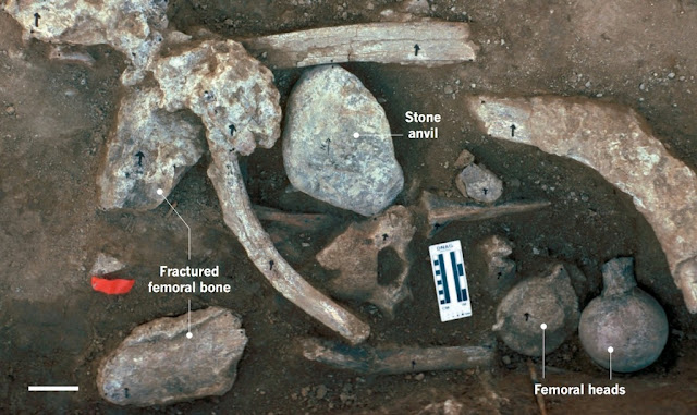 Archaeology/ Paleolithic Home Bases term paper 8131