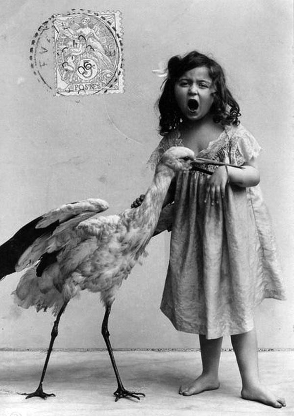 Strange and Unusual Vintage Animal Photographs ~ Vintage ...   Weird Retro Photography