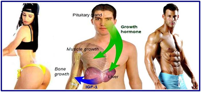 Ways to increase growth hormone production
