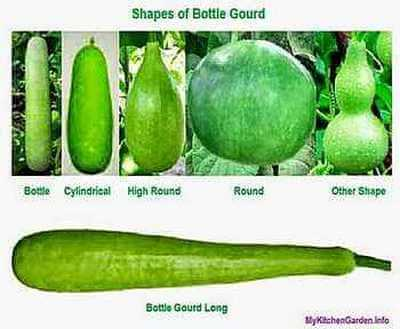 Shapes and types of Bottle Gourd