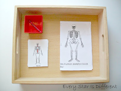 My human skeleton book printable