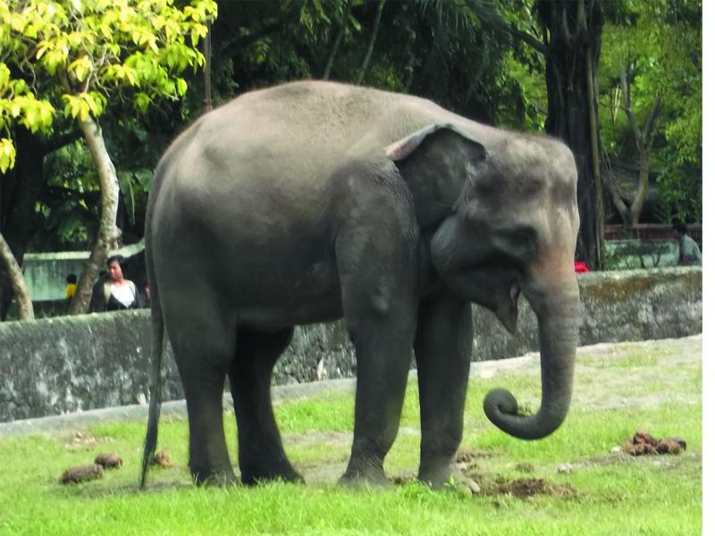 Foto-Foto Gajah di Kebun Binatang Gembiraloka | Fauna Gue