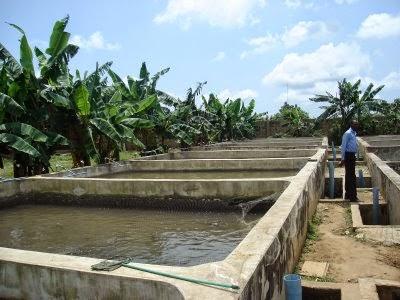 constructing fish pond in nigeria