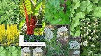 Utilité de traitements à base de plantes