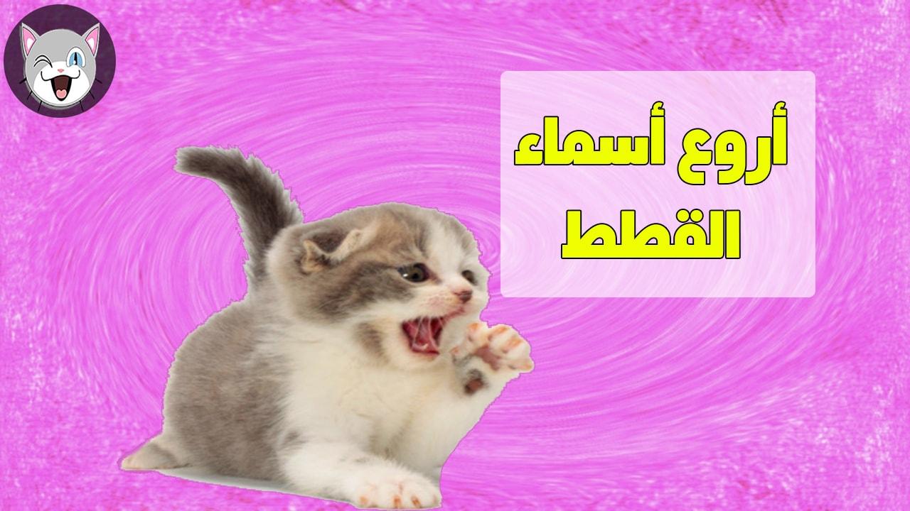 اسماء قطط جميلة للذكور و للإناث و تحفظها القطط بسرعة