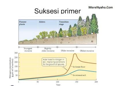 Suksesi Primer, Statistik Suksesi Primer Gambar, Suksesi Ekologi
