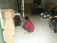 Pengiriman KTP Palsu dialamatkan ke Seorang Pelatih Anjing.