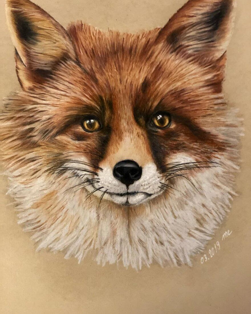10-Red-Fox-Eichenberger-Rodriguez-Colored-Wildlife-Drawings-www-designstack-co