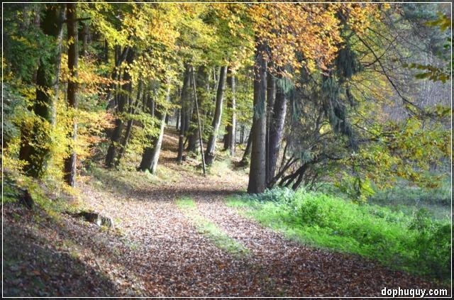 lối đi vào rừng thu