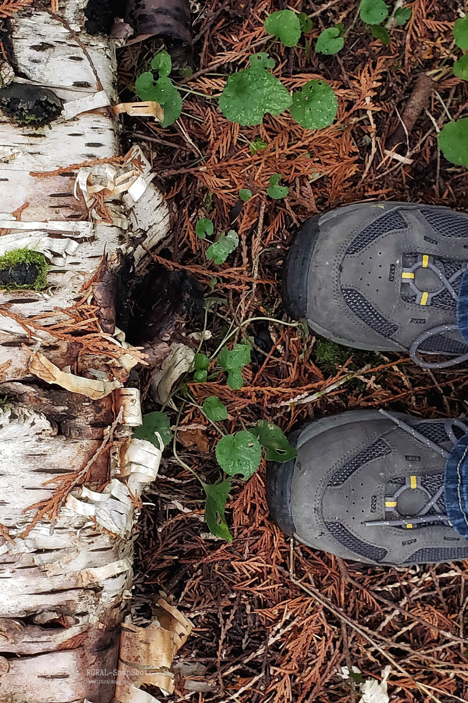 Feet standing next to a fallen birch tree from www.ruralmag.com