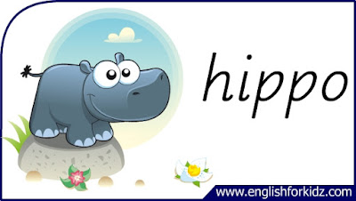 hippo flashcard