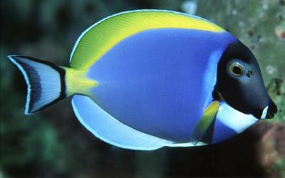 Fish,freshwater fish,saltwater fish,aquarium