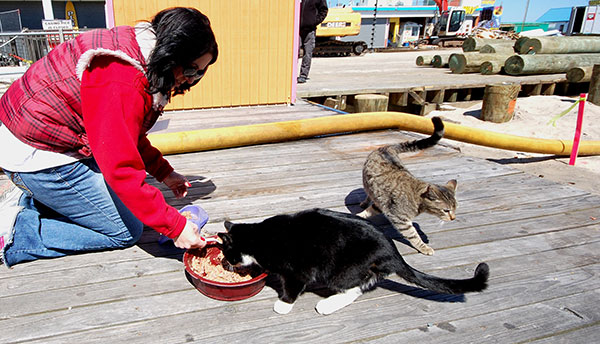 Catnip Nation|Seaside Heights Cats
