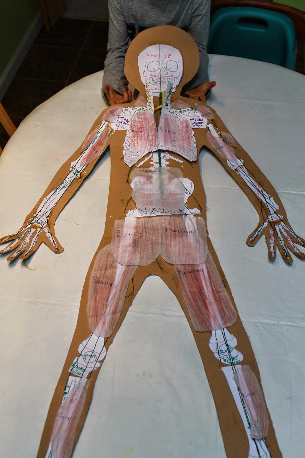 You Want To Learn About What Human Anatomy The Muscular
