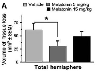 図:メラトニンの脳卒中治療効果