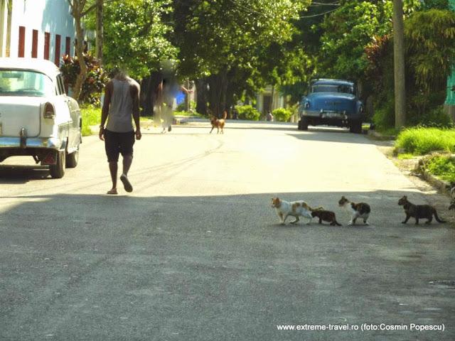 "pe o strada in Cuba"" un caine, o pisica matura si trei pui de pisica"