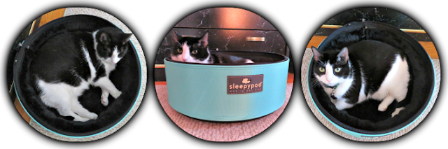 cat summer safety|keep your cat cool