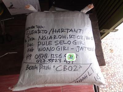 Benih Pesanan   SUDARTO Wonogiri, Jateng.  (Setelah Packing)