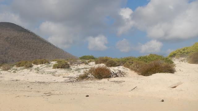 Floreana Galapagos dunes