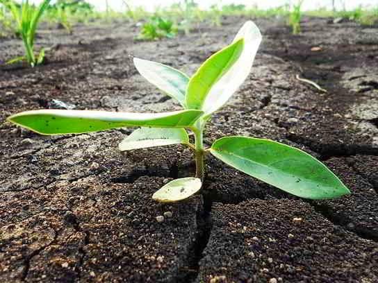 Imagen de una semilla recién germinada, un incipiente tallo verde