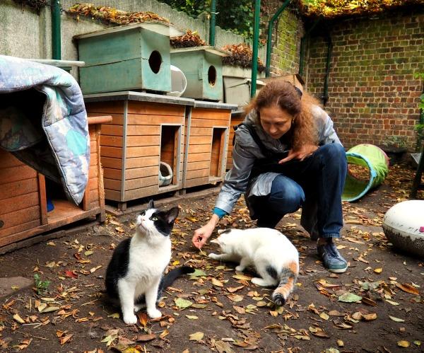 cat rescue volunteers