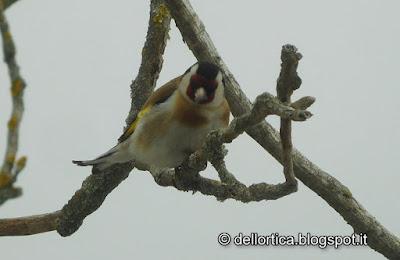 fattoria didattica uccelli rose ortica savigno bologna valsamoggia zocca orto