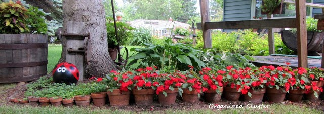 Using Red Blossoms in Garden & Pots www.organizedclutterqueen.blogspot.com
