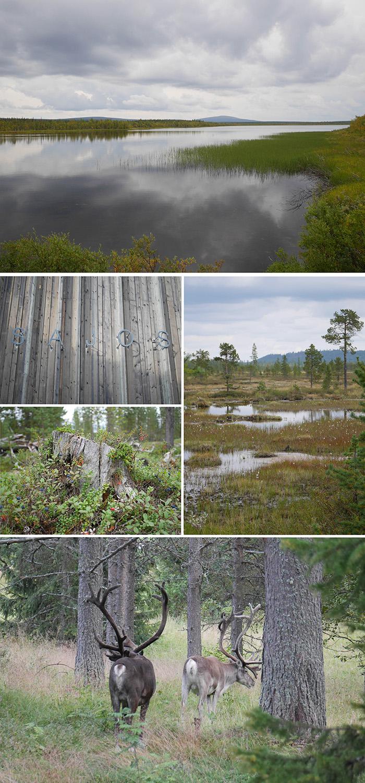 Sapmi Lappland Natur