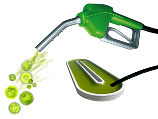 Microalgae-derived biofuel
