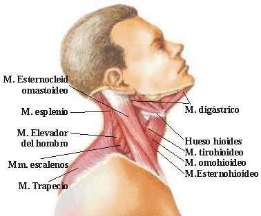 dolor de cabeza cuello y mareos